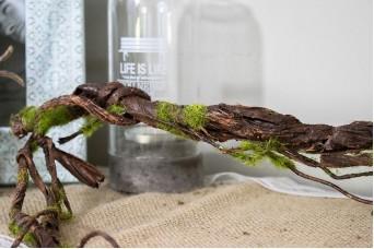 Κλαδί Ρίζα 190cm Καφέ AF-5413