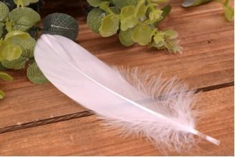 Φτερό Λευκό 50τεμ F8708W